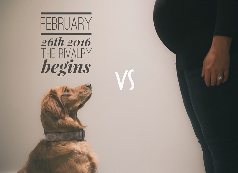 Pregnancy Announcements Youll Want to Steal – Birth Announcement with Dog