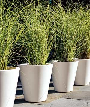 Matching pots planted with ornamental grass lend drama to for Low maintenance outdoor potted plants