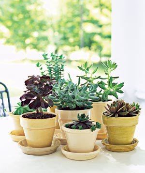 How to care for potted plants real simple for Best easy care outdoor plants