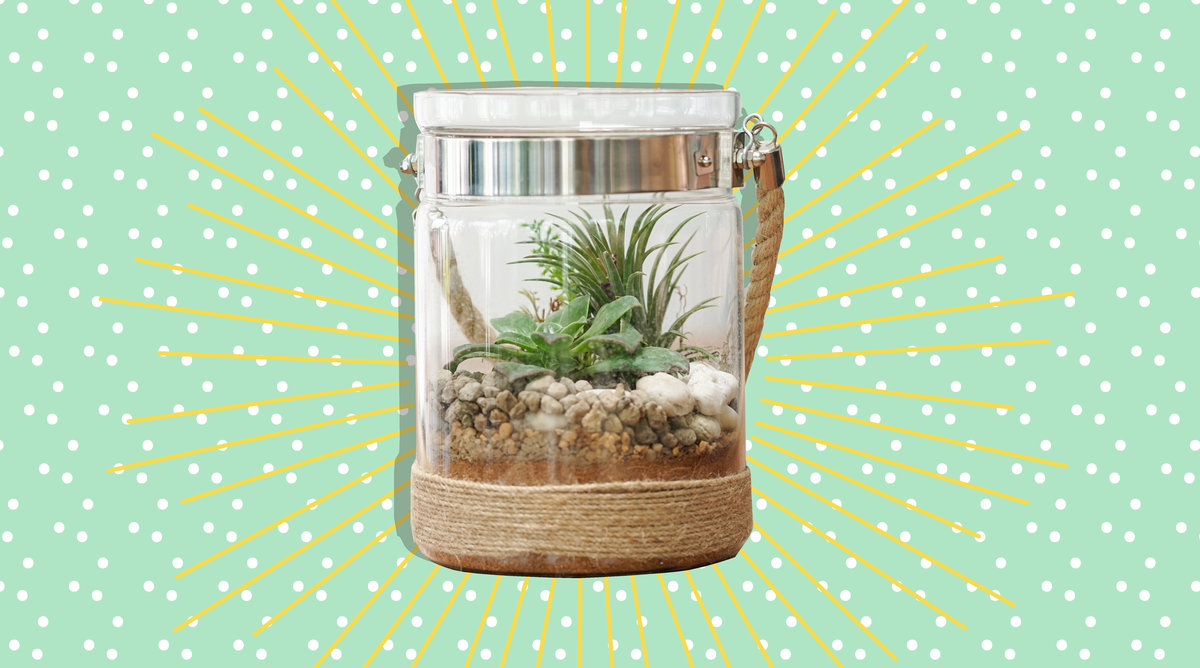 Here's How to Keep Your Air Plants Alive for Years