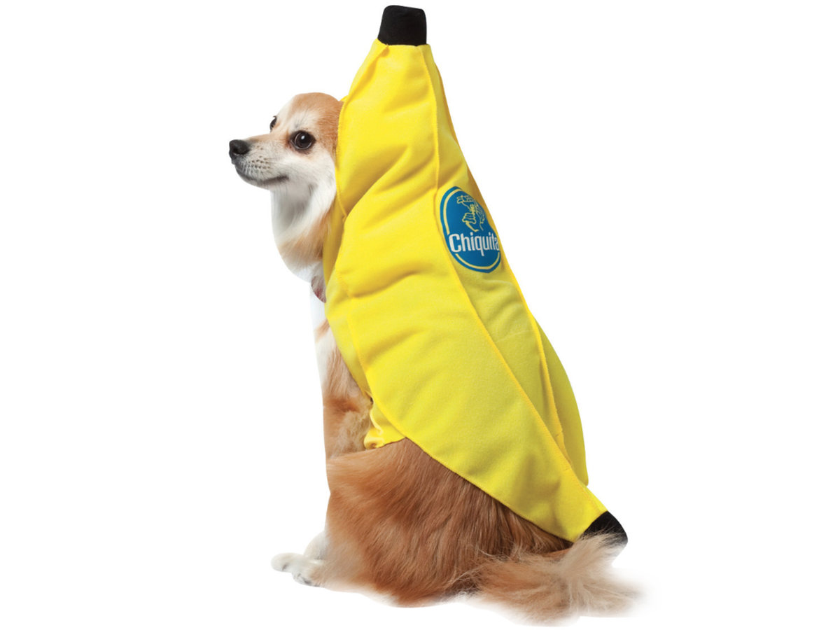 The Most Adorable Halloween Costumes for Pets