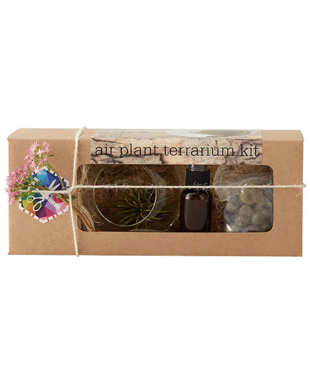 Hanging Tillansia Grow Kit