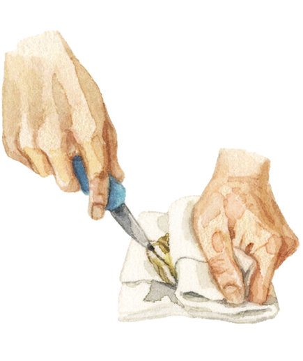 Illustration: Shucking an oyster, step 1