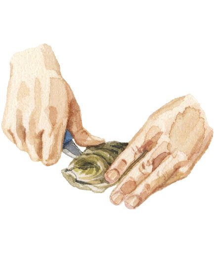 Illustration: Shucking an oyster, step 2
