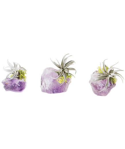 Amethyst Crystal Airplant