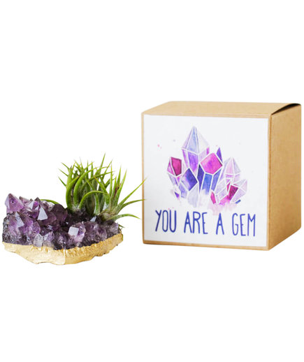 Amethyst Crystal Air Plant