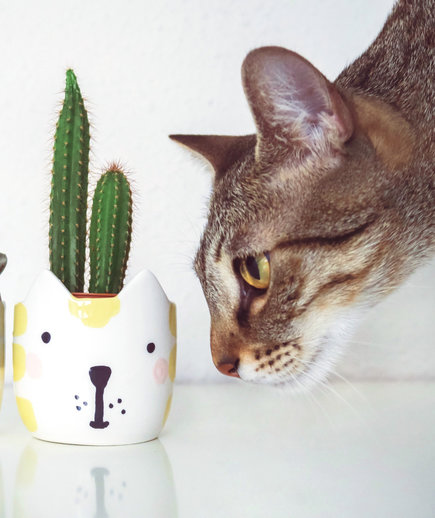 Two cacti plants and a cat