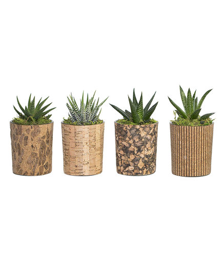 Best Last-Minute Christmas Gift for Coworkers: Hallmark Flowers Live Succulents Cork Containers