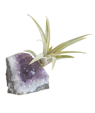 Amethyst Geode Chunk With Air Plant