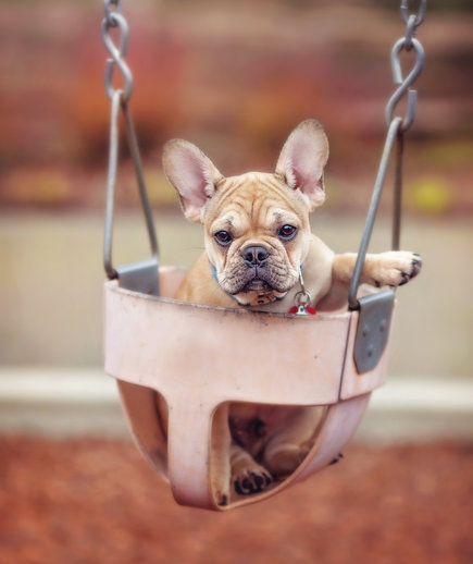 puppy in swing