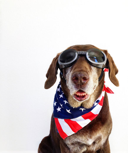Dog wearing a patriotic bandana on the 4th of July