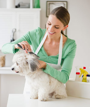 Woman grooming a white dog