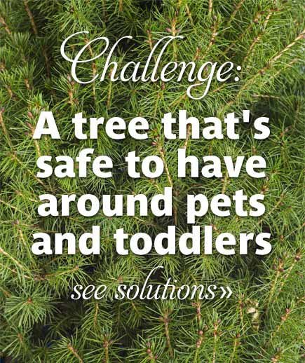 Challenge: A tree that's safe to have around pets and toddlers