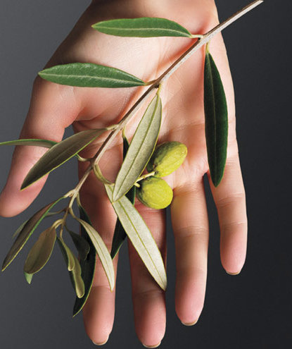 hand-olive-branch
