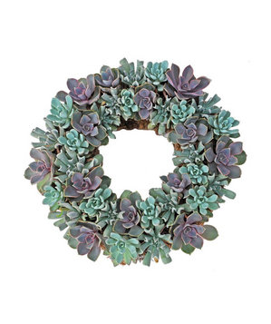 Echeveria Living Wreath