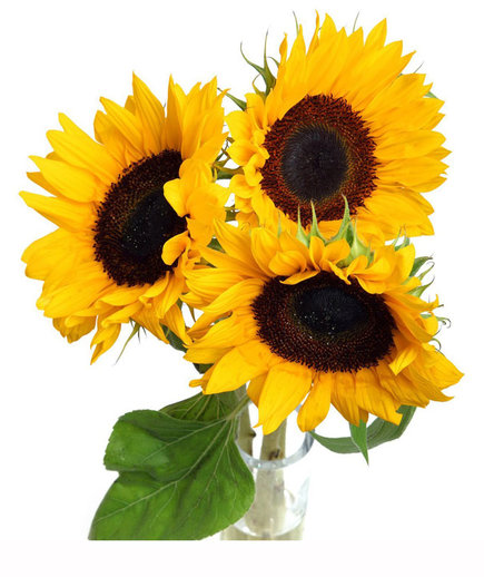 Sunflowers Amazon Prime Now
