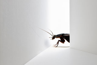 things-exterminators-know-cockroaches