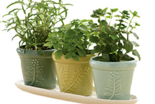 new-gardening-uses-for-old-things
