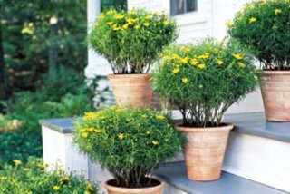 easy-container-gardens