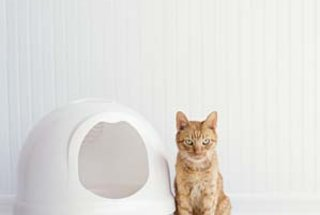 where-put-cat-litter-box