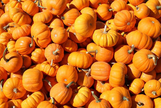 is-pumpkin-a-fruit