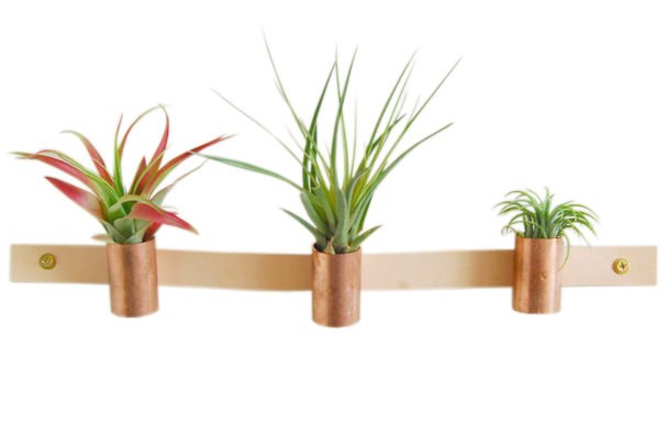 Leather copper air plant holder creative valentine s for Air plant holder ideas