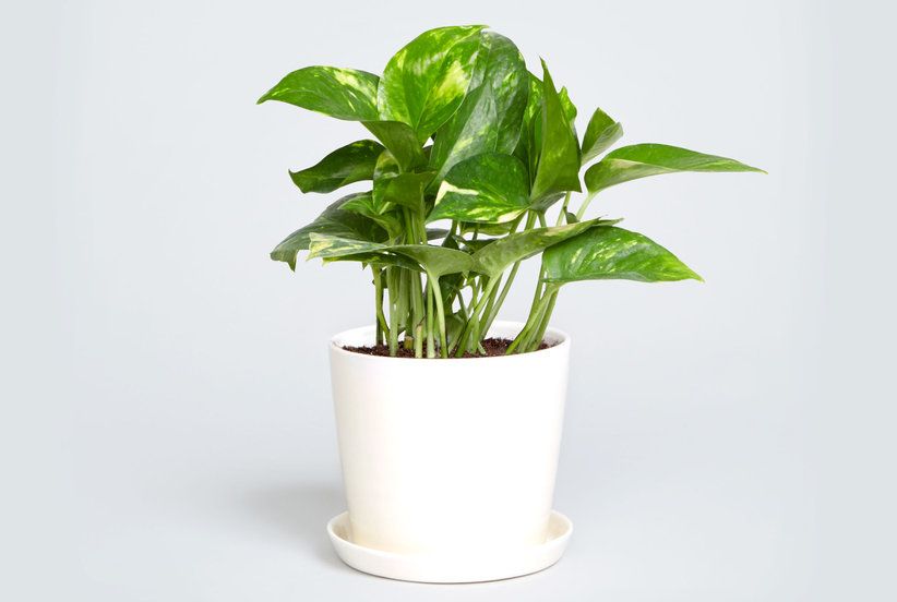 Kitchen How To Choose A Plant For Every Room In Your
