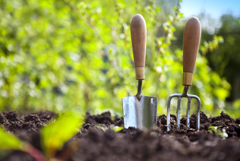 Summer gardening tips real simple - Summer time gardening tips ...