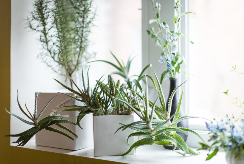 16 Low-Maintenance Indoor Houseplants Most Likely to Survive All Year Long