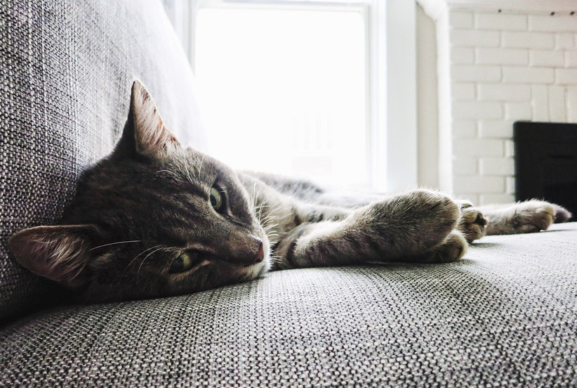 How to Make Your Home Look (and Smell!) Pet-Free