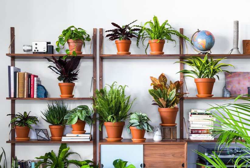 The New Greenhouse That Delivers a Lush Plant to Your Door—Starting at Just $35