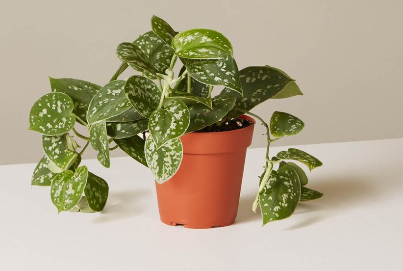 5 Hard-to-Kill Houseplants That Will Make Your Home Feel Like Spring