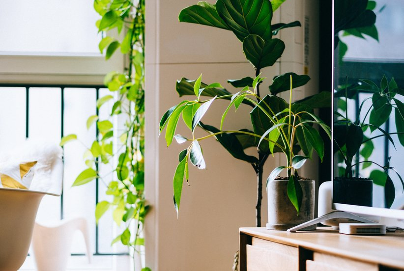 The Surprising Health Benefits of Owning House Plants (and How to Incorporate Them Into Your Decor)