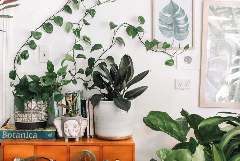 Zero-Maintenance Faux Plants That Look Identical to the Real Deal