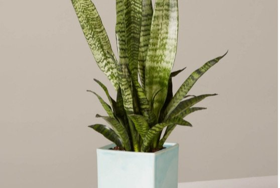 3 New Brands That Deliver Indoor House Plants to Your Door