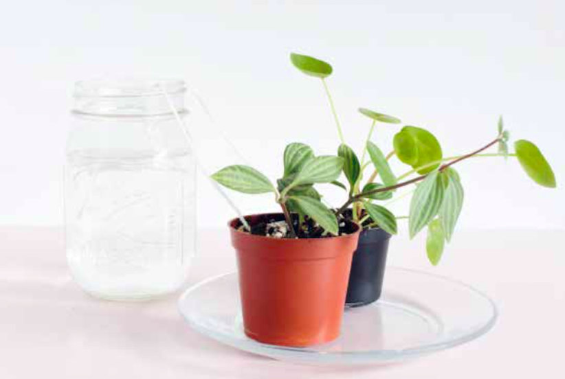 The Trick to Low-Maintenance House Plants You (Almost) Never Have to Water
