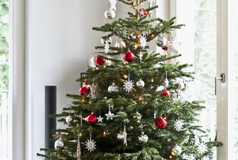 7 Essential Things You Need to Know Before Buying Your First Christmas Tree