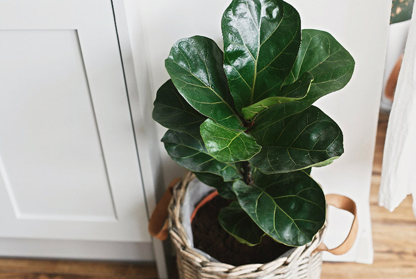 10 Common Houseplants That Are Difficult to Take Care Of