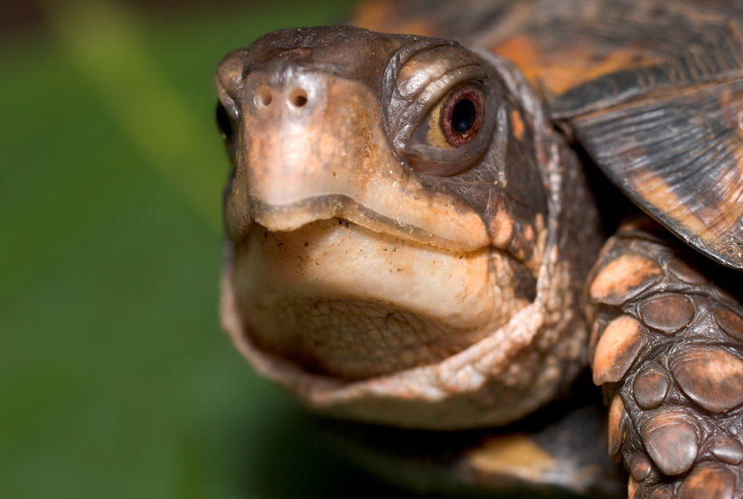 How to Care for Your Box Turtle's Skin