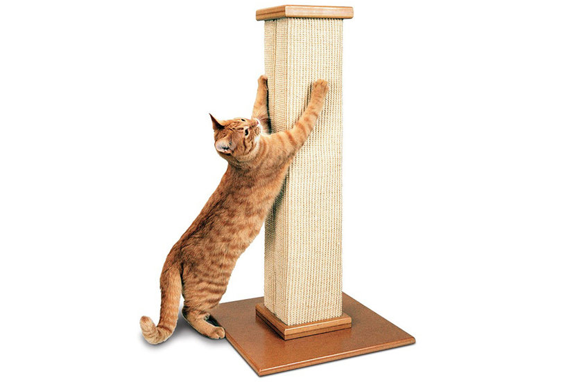 The Cat Scratching Post That Saved My New Couch From Being Shredded