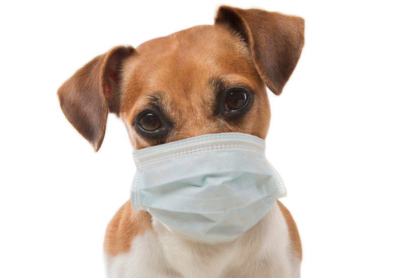 Dog Flu Is a Real Danger to Pets—Here's What You Need to Know