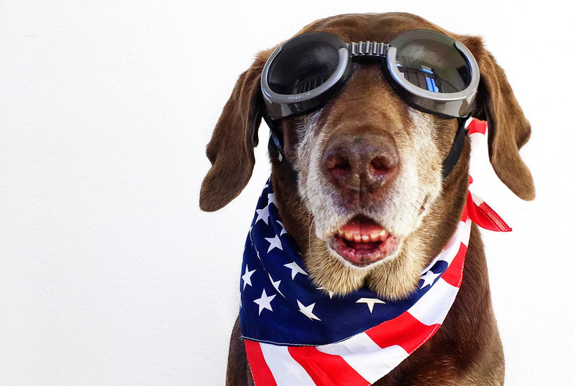 5 Ways to Keep Dogs Safe During Fireworks