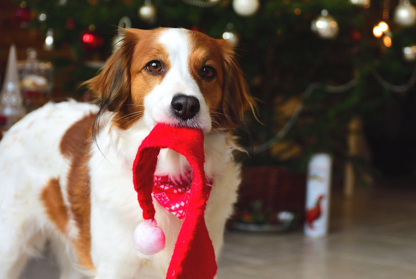 What My Dog Taught Me About Enjoying the Holidays