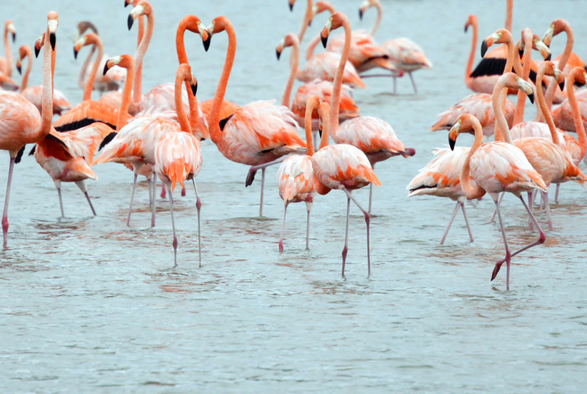 How to Hang with Flamingos All Day (and Get Paid For It)