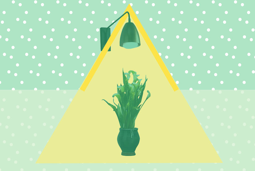 These Genius Light Bulbs Are Designed to Help Your Plants Grow—And They're Available on Amazon