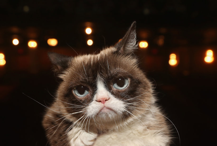 Grumpy Cat Just Won a Major Lawsuit