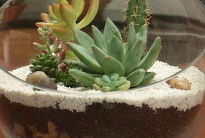 How To Make A Terrarium Video And Step By Step Instructions