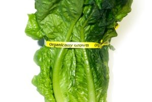 Romaine Lettuce Likely the Source of Recent E. Coli Outbreak