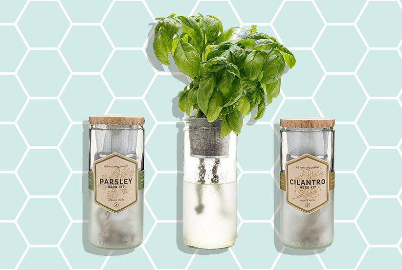 These Garden Starter Kits Make It Easy to Grow Herbs, Vegetables, and Flowers