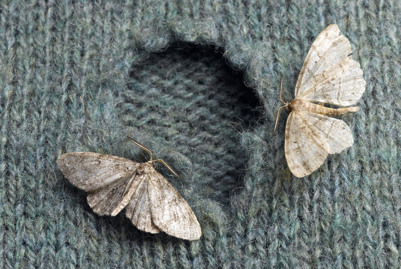 How to Stop Moths From Eating Your Clothes